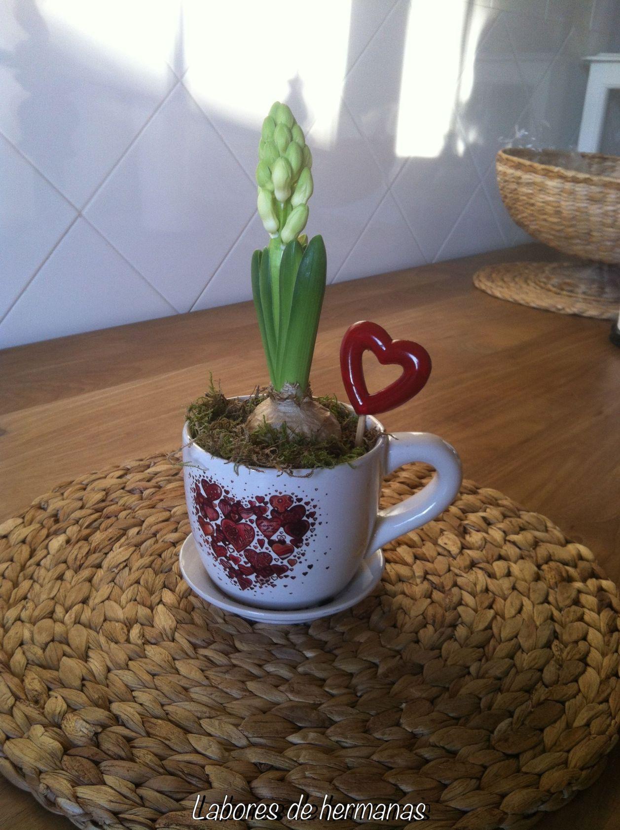 El jacinto todavia no está en flor, de todos modos el tiesto esta muy chulo, no?